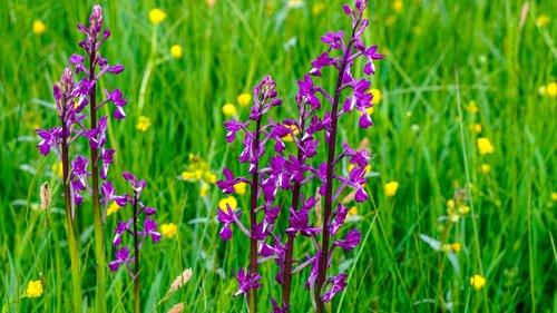 flower  prado  spring