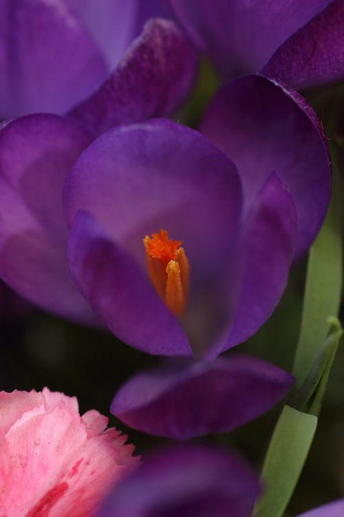 flower spring seedling