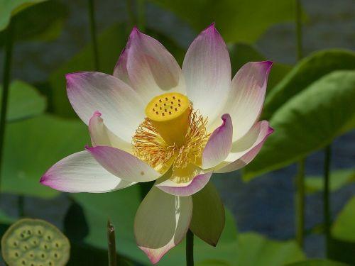 gėlė,antspaudas,pistil,gamta,flora,gražus,spalva,žydėti,žiedas,žydėti,augalas,gėlės