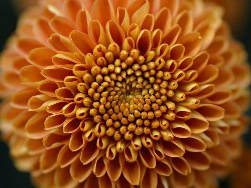 gėlė,gamta,flora,gražus,spalva,žydėti,žiedas,žydėti,augalas,gėlės,oranžinė,geltona