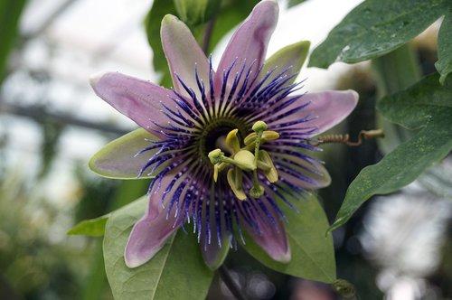 flower  botanic garden