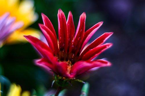 flower  beautiful  nature