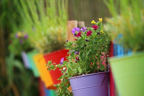 flower  plant  zauberglockchen