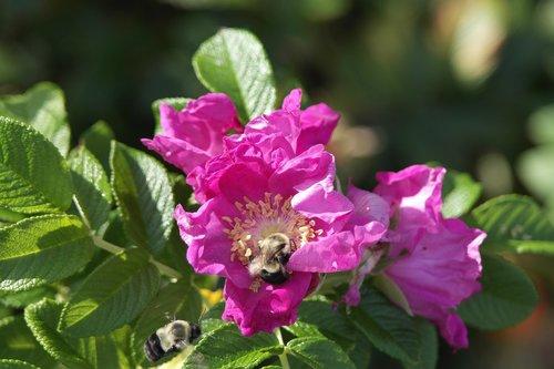 flower  green  pink