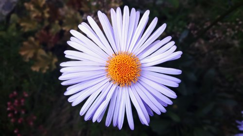 flower  bright  circle