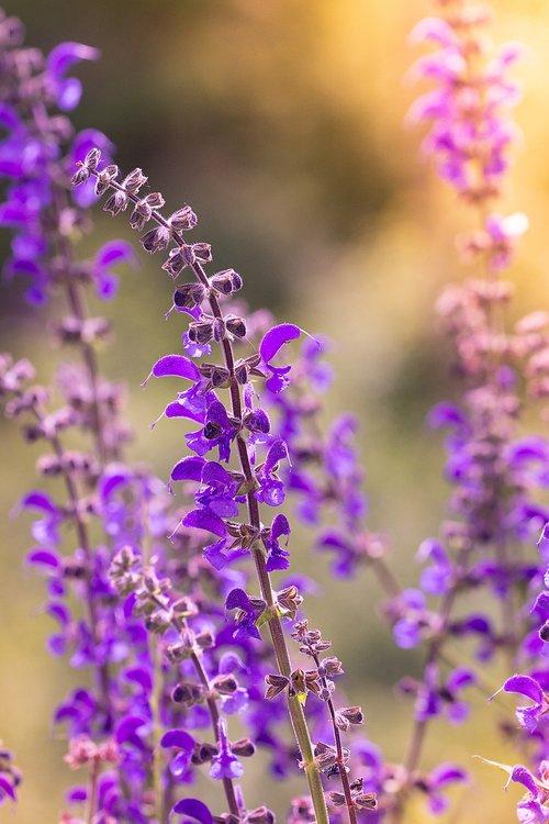 flower  plant  purple