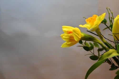 flower  vernal  flora