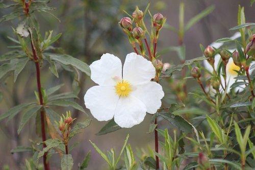 flower  spring  jara