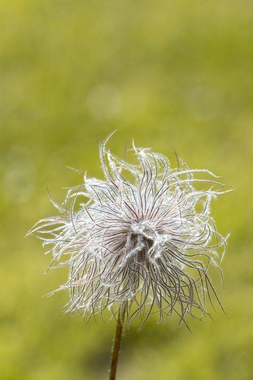 flower  faded  faded flower