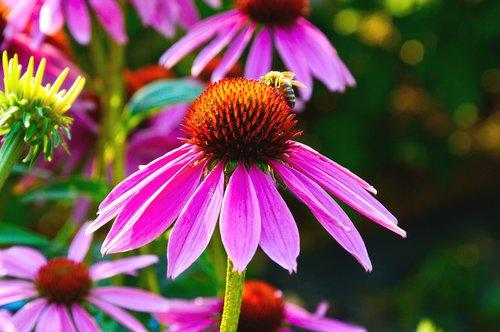 flower  violet  heart orange