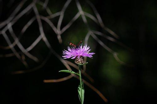 flower  plant  forest flower
