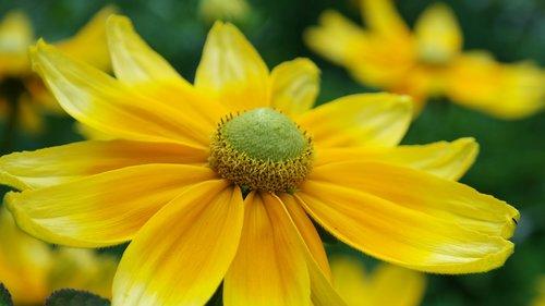 flower  yellow  summer