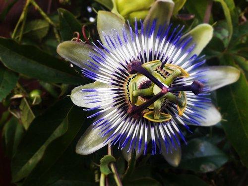 flower  violet  lila