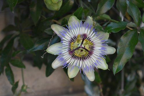 flower  south  unusual