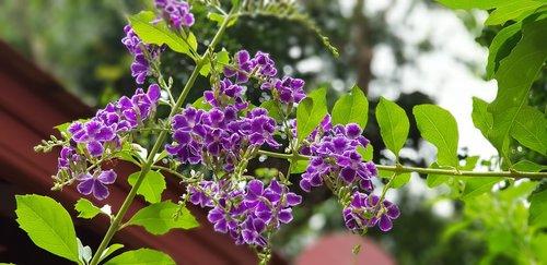 flower  refreshing  beautiful