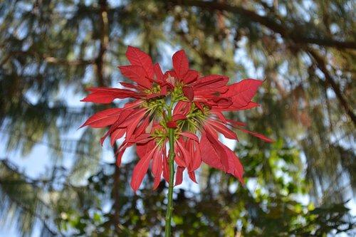flower  nature  flourish