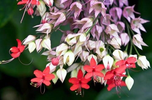 flower  petals  stamen