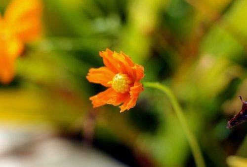 flower  small  petal