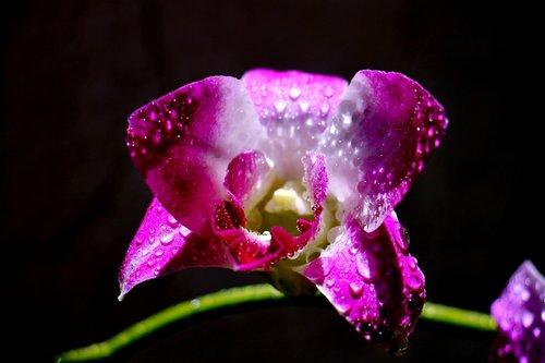flower  feng  rolling