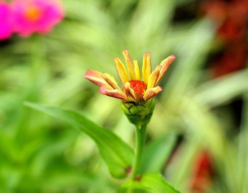 flower  small  cute