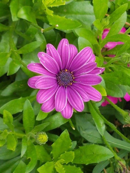 flower  summer  blooms