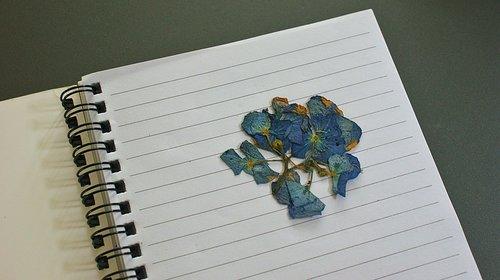 flower  dried  notebook