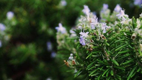 flower  plants  plants croatia