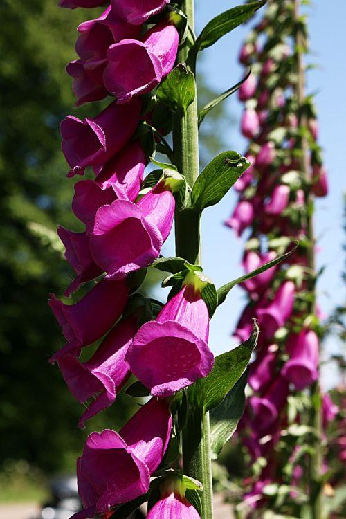 flower flowers bells