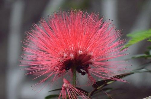 flower  plant  flora