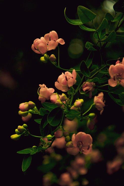 flower  southwest wealth big  chengdu