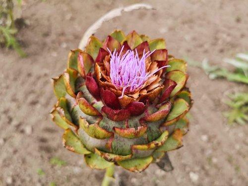 flower  veg  colour