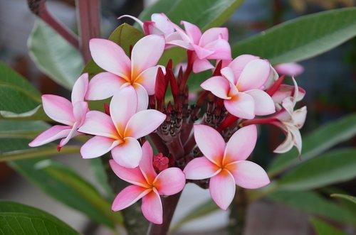flower  nature  plants