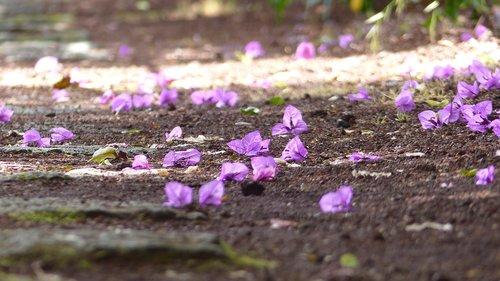 flower  mood  flowers