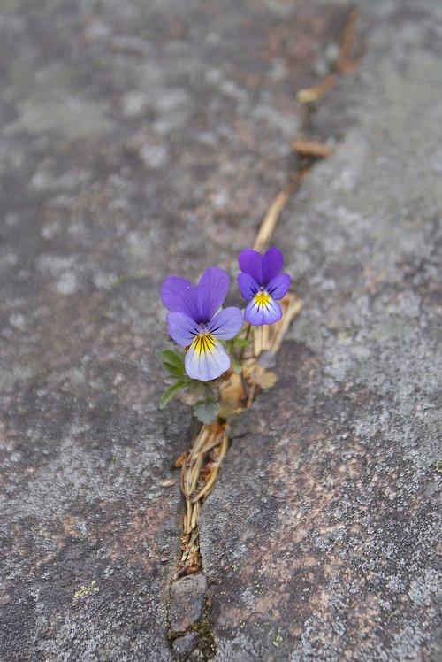 flower  survival  nature