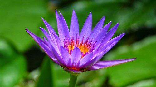 flower  plant  blossom