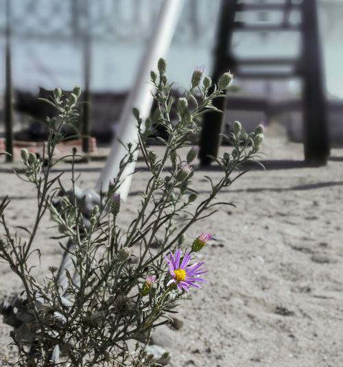 flower daisy barrier