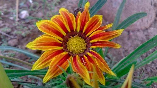 flower  botany  plant