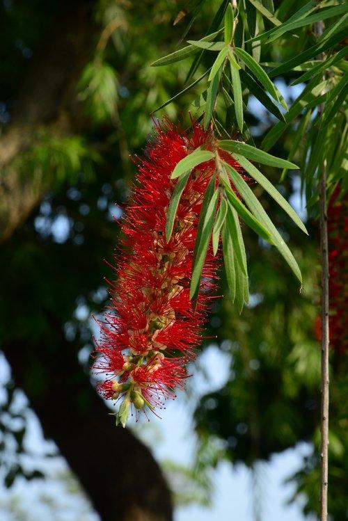 flower  plant  biological