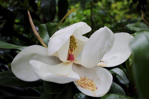 flower  garden  bloom