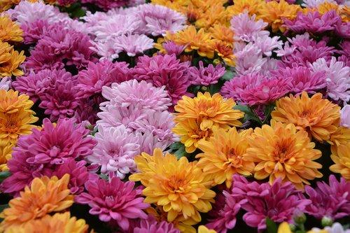 flower  flowers  plants