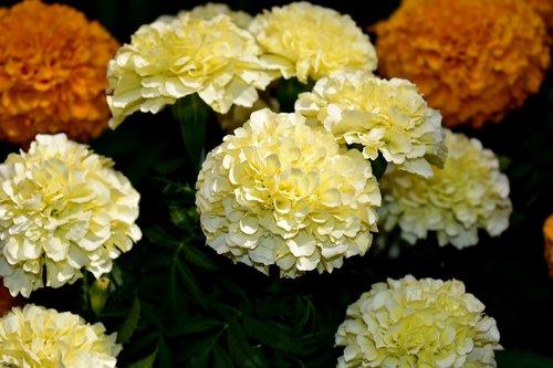 flower  flowers  dead