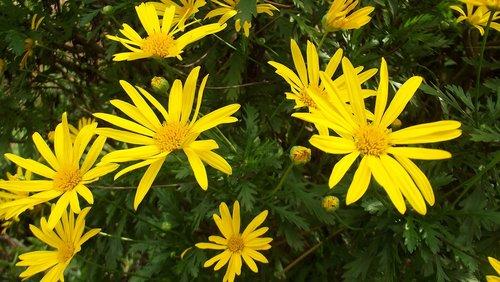 flower  flowers  margaritas