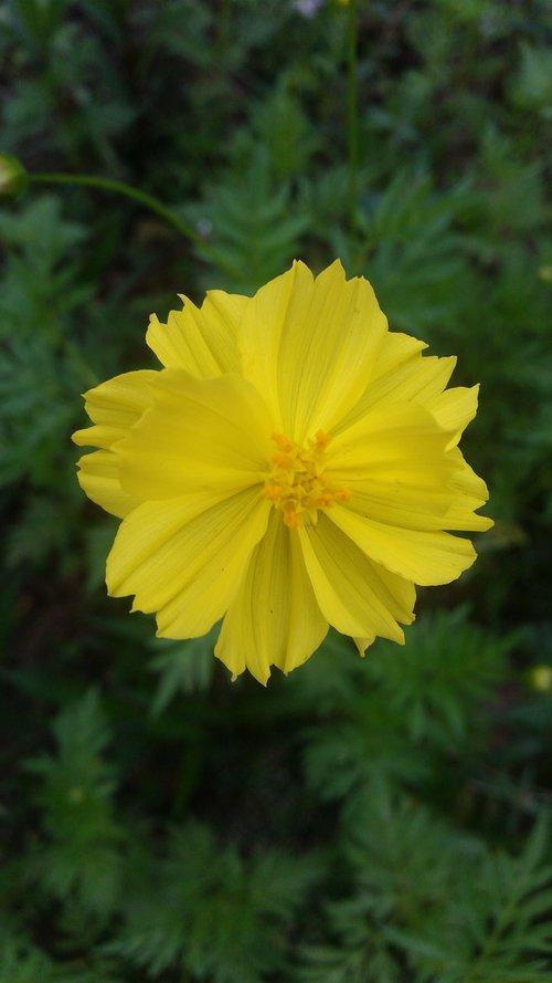 flower  flowers  starburst