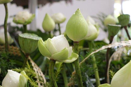 flower  lotus  nice