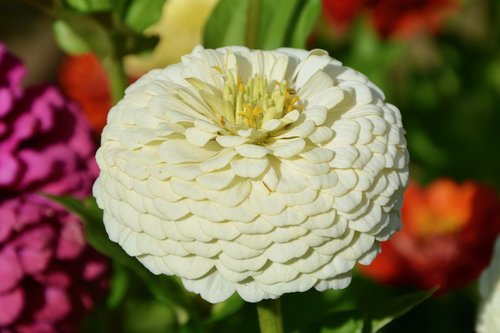 flower  plant  bouquet offer