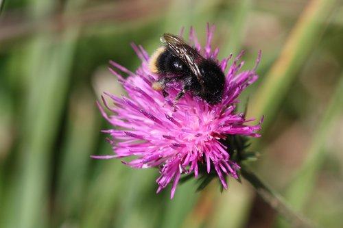 flower  alm  summer