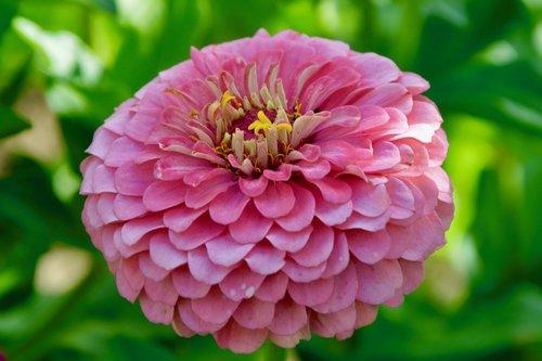 flower  plant  flower flower