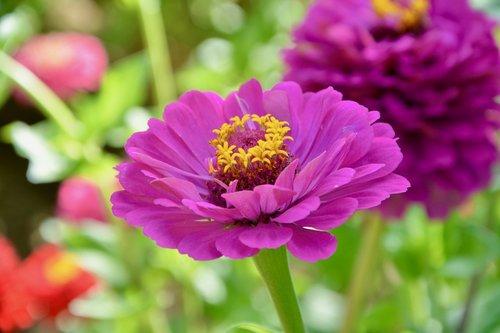 flower  plant  flower color violet
