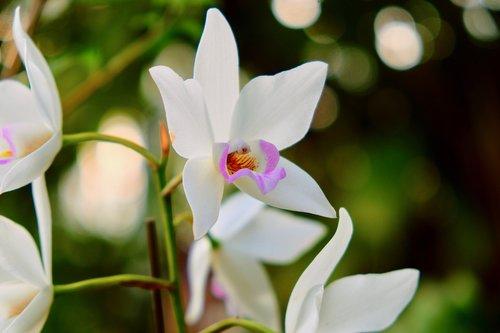 flower  petal  lily