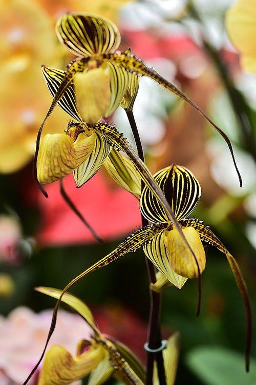 flower  flowers  orchids
